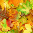 Autumn Leaves — Stock Photo #6486413