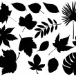 Foliage silhouette — Stock Vector