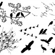 Birds silhouette — Stock Photo