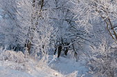 Cold winter day — Stock Photo