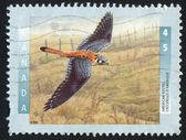 Poststamp — Foto Stock
