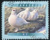 Poststamp — Stock Photo