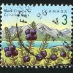 Postage stamp — Stock Photo #6017563