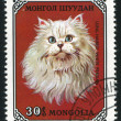 Poststamp Cat — Foto Stock