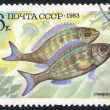 Stock Photo: Poststamp fish