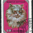 Stock Photo: Poststamp Cat