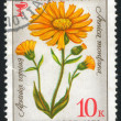 Poststamp flower — Stock Photo #6084891
