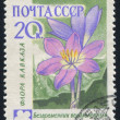 Poststamp flower — Stock Photo