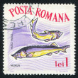 Poststamp fish Beluga — Stock Photo