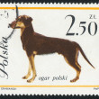 Poststamp dog — Stock Photo