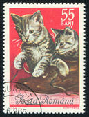 Poststamp cat — Stock Photo