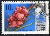 Poststamp flower — Stock Photo