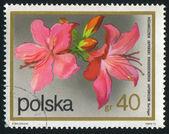 Poststamp květ — Stock fotografie