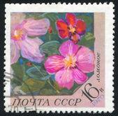 Kwiat poststamp — Zdjęcie stockowe
