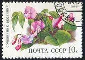 Flor poststamp — Foto de Stock