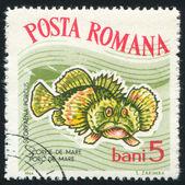 Francobollo Hogfish — Foto Stock