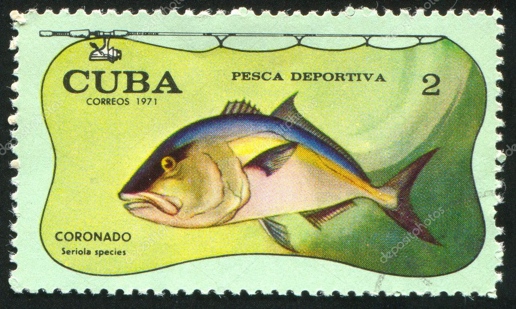 CUBA - CIRCA 1971: stamp printed by Cuba, shows fish, Seriola species, circa 1971  Stock Photo #6084867