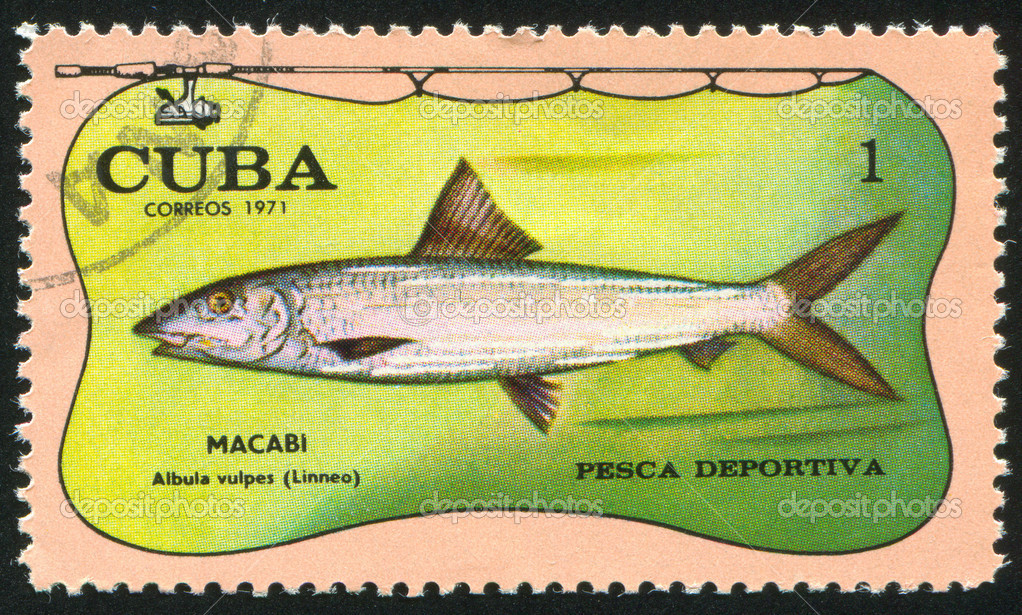 CUBA - CIRCA 1971: stamp printed by Cuba, shows fish, Albula vulpes, circa 1971 — Stock Photo #6085062