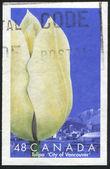 Tulip City of Vancouver — Stock Photo