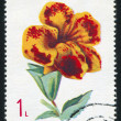 Poststamp Mimulus — Stock Photo