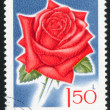 Poststamp Rose - Stock fotografie