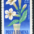Poststamp flower - Stock fotografie