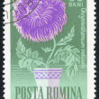 Poststamp flower — Stock Photo #6201745