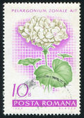 Poststamp Geranium — Stock Photo