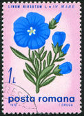 Poststamp Flax — Foto Stock