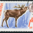 Stamp Deer — Stock Photo #6266064