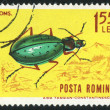 Poststamp bug — Stock Photo #6266162