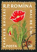 Poststamp Poppies — Stock Photo