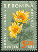 Poststamp Buttercup — Stock Photo