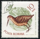 Eurasian woodcock — Stock Photo
