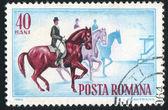 Horse Show — Foto Stock