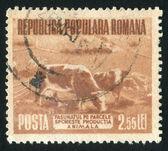 Stamp bull — Foto de Stock