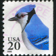 Blue Jay - Stock Photo
