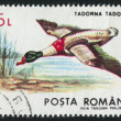 Poststamp duck — Stock Photo