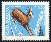 марку, напечатанную румынии — Стоковое фото