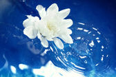 Flower on the water — Stock Photo