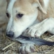 Young dog eating - Stockfoto