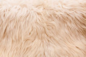 Natural furry background — Stock Photo
