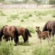 Family of horses on the pasture - Stock Photo