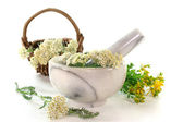 Medicinal herbs — Stock Photo