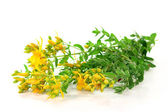 St. John's wort — Stock Photo