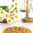 Chamomile — Stock Photo