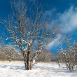 Winter icy forest — Stock Photo #5822203