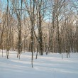Winter icy forest — Stock Photo #5822487
