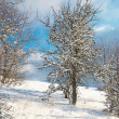 Stock Photo: Winter icy forest