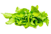 Green lettuce isolated on white. — Stock Photo